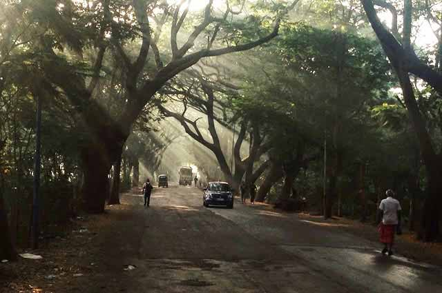 Haunted Places in Mumbai - Aarey Milk Colony Road